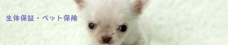 ペット保険・生体保証
